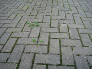 brick_weeds